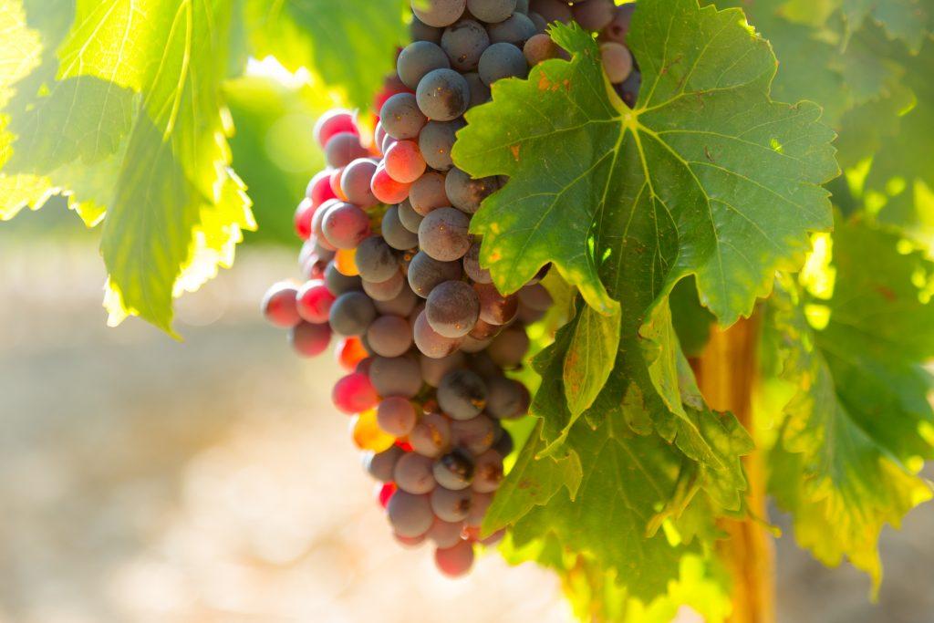 experiencia en un viñedo- Fotografía de preepik.es